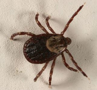 Ja hoor, ziekte van Lyme…