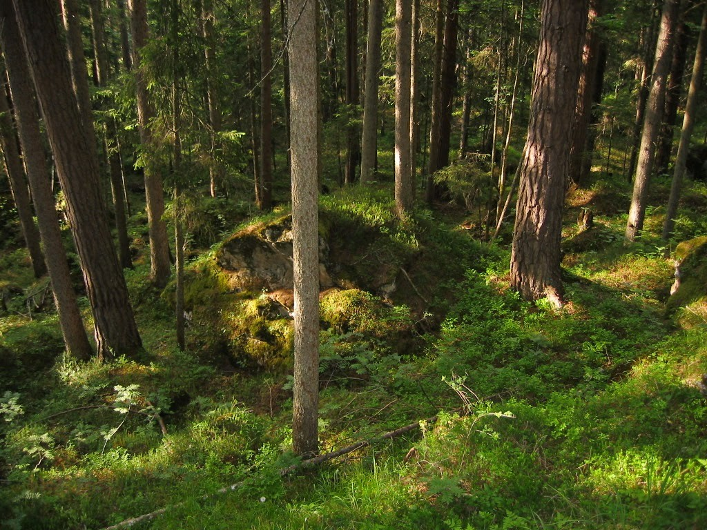 onbehandelde tekenbeet zwarte woud