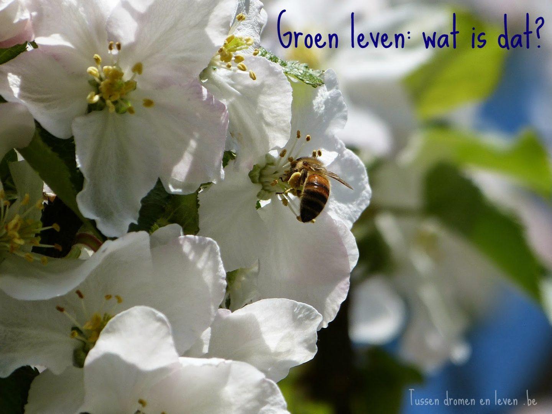 Groen leven: wat is dat?