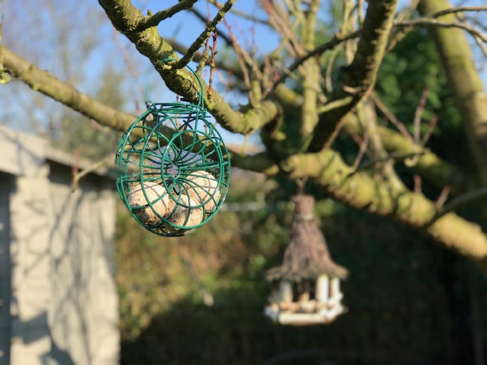 Afvalvrij vogels voederen: vetbollen zonder plastic netje zijn groener én veiliger