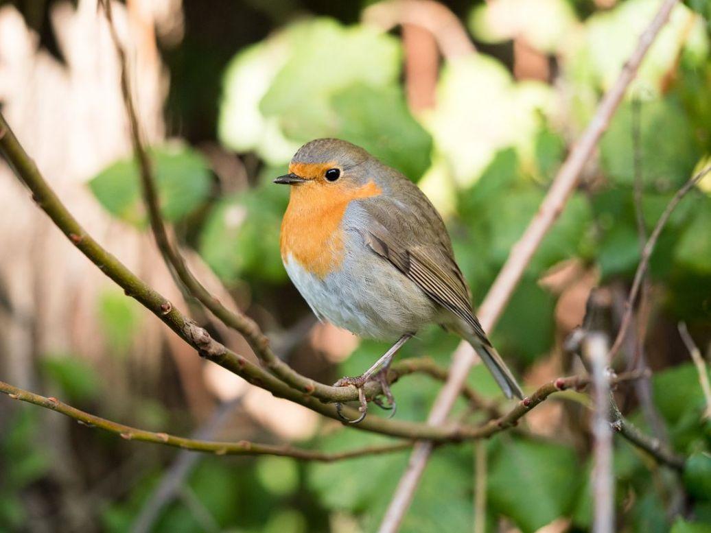weetjes over vogels voederen in de tuin