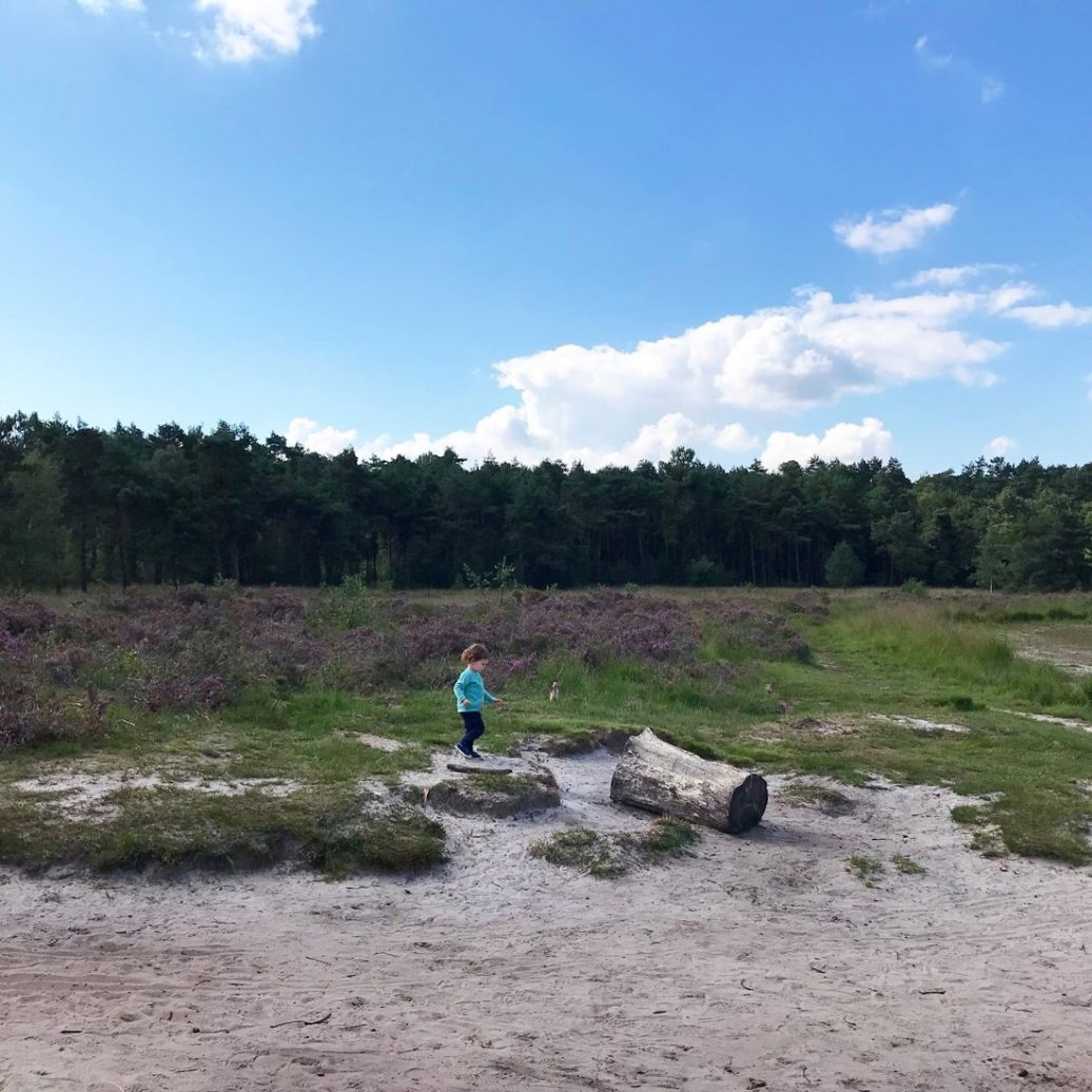 Uitstap: wandelen op de Kalmthoutse Heide